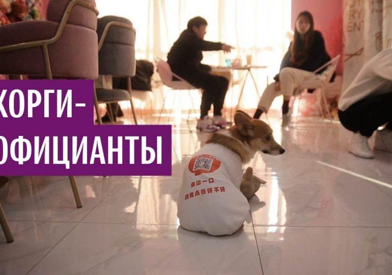 Собаки-официанты обслуживают в китайском ресторане