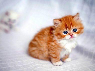 В Китае клонировали котёнка