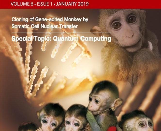 Китай провел клонирование обезьяны с отредактированным геномом