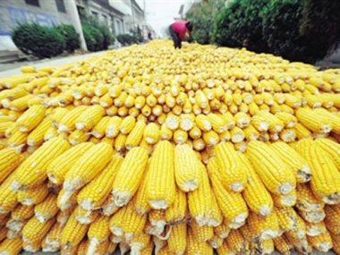 Китай собирается сократить дефицит некоторых сельскохозяйственных продуктов