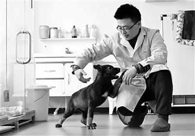 Китай создал первую клонированную служебную собаку