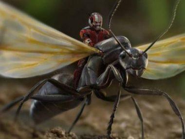 Китайская наука выявила гены «человека-муравья»