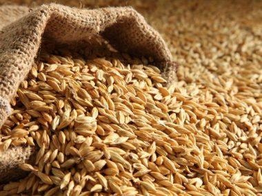 Экспорт казахстанской пшеницы в Китай динамично растет