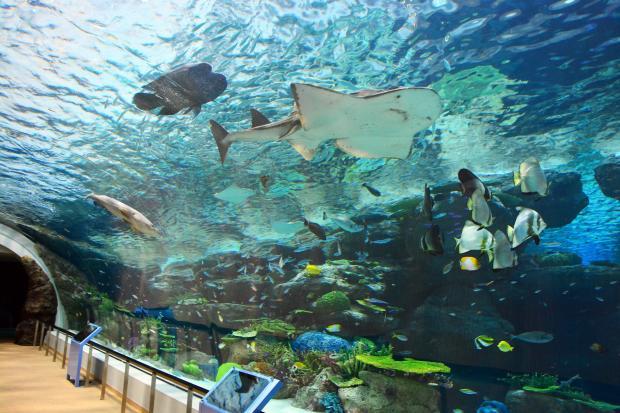 Впервые в Китае откроют высокогорный аквариум