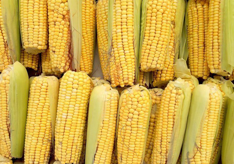 Китай закупил украинской кукурузы почти на $500 млн