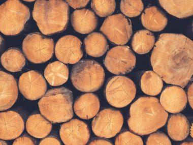 Россия может запретить экспорт леса в Китай