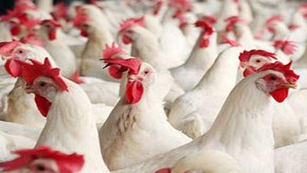 Украинская курятина может выйти на рынок Китая до конца года - Bloomberg