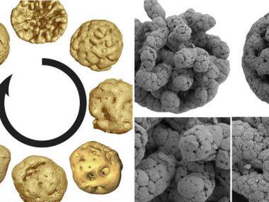 В Китае нашли древний окаменелый эмбрион неизвестного организма