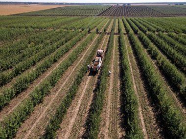 Украинские аграрии не видят причин для волнения из-за вируса