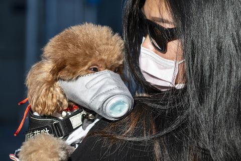 В Украине запретили ввоз домашних животных из Китая