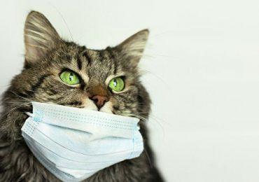 Китайские ученые обнаружили коронавирус у бродячих кошек