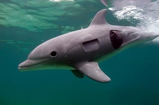 В китайских океанариумах могут заменить живых дельфинов на роботов