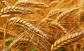 Китай увеличивает объемы закупки украинского зерна
