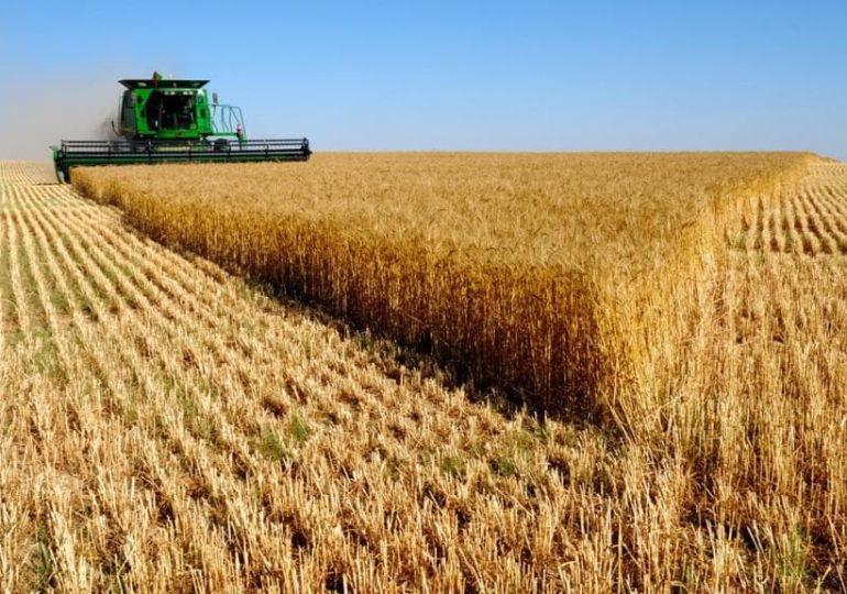 Китай увеличил импорт зерновых