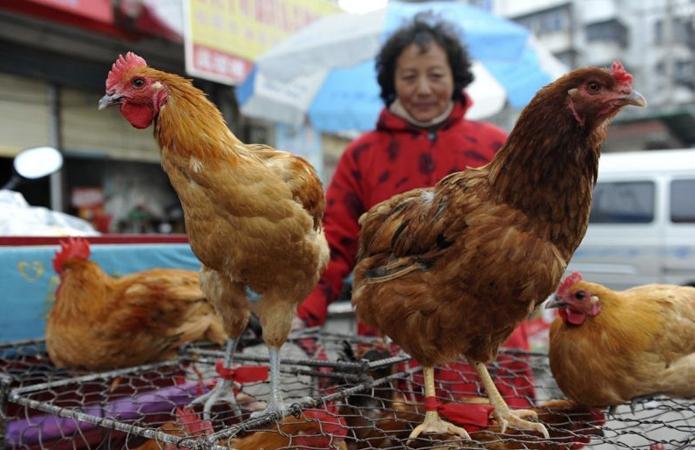 Китай прекратит убой и продажу живой птицы на мокрых рынках