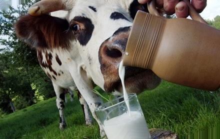 Производство молока в Китае увеличилось на 7,9% с января по июнь 2020 года