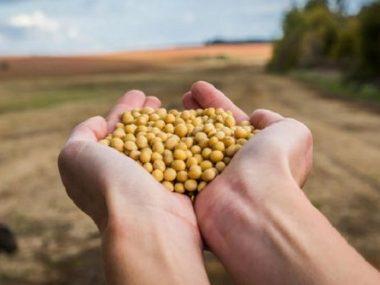 Украина и Китай намерены создать совместные проекты по переработке зерна