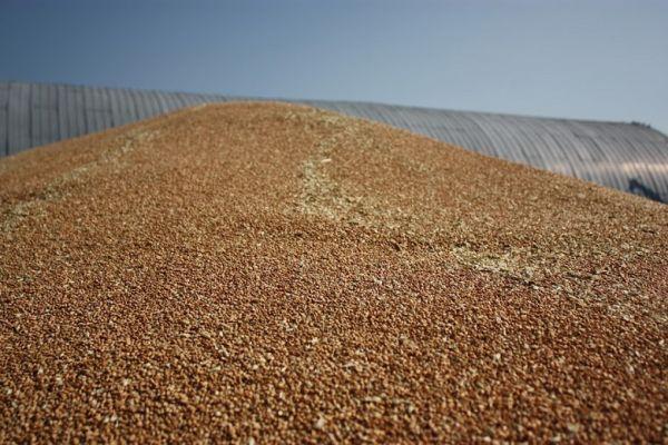 Китай в два раза увеличил закупку ячменя в Украине
