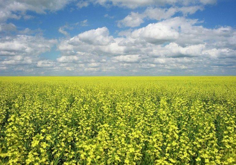 Китай готовится открыть рынок для украинского экспорта сорго