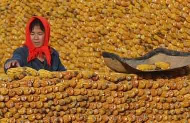 Китай может увеличить объем тарифной квоты на на импорт кукурузы