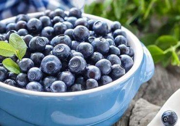 Голубика – перспективный плод для экспорта на китайский рынок – Тарас Баштаник