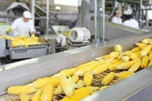 Китайская Fufeng Group заинтересовалась строительством завода по переработке кукурузы на Тернопольщине