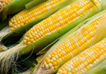 Китай импортировал 1.93 млн тонн кукурузы в марте 2021 г.