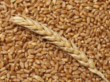CCEC до конца 2021 года получит 1 млн тонн зерна от ГПЗКУ