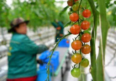 Правительство Китая обнародовало план зеленого развития сельского хозяйства