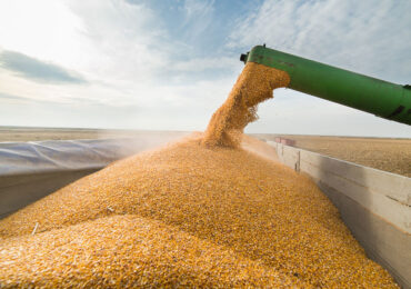 Украине придется конкурировать с США за экспорт кукурузы в Китай — аналитик