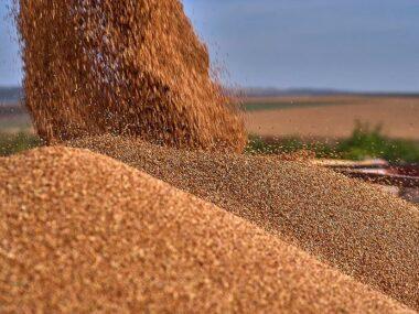 Китай отказался принимать зерно из Казахстана